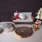ハムスターのクリスマス
