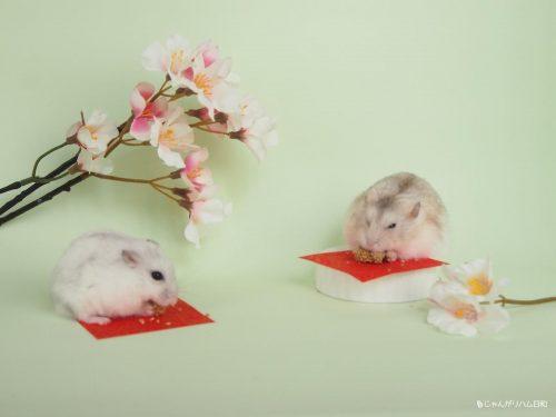 希助とあられのお花見