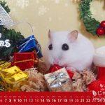 ハムスター12月デスクトップ壁紙 クリスマス