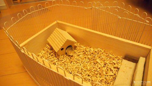 100均ダイソーの木製ハムスターハウス