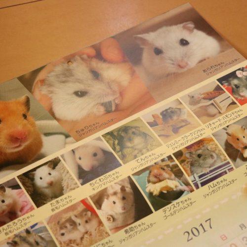ハムスター・モルモットづくしカレンダー