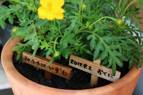 ロボロフスキーのいずもとおくに 花