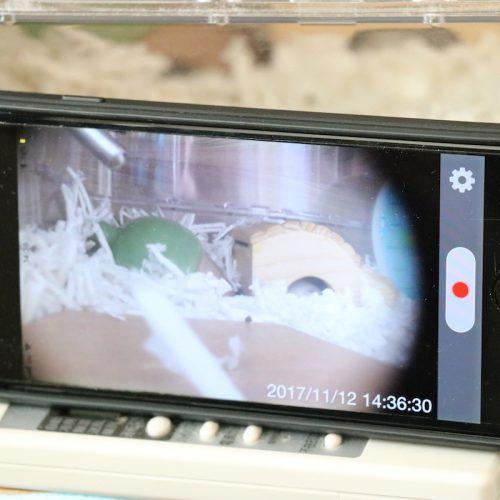 不要なiPhoneを監視カメラにする
