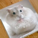 栗丸写真集 -KURIMAU- ハムスター写真集